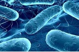 Bacterias, hongos, virus y protozoos en Madrid y Corredor del Henares