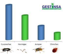 Plagas más comunes en España