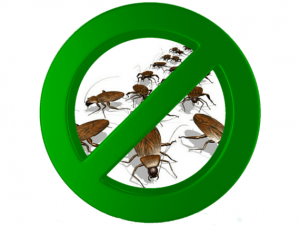 Consejos para eliminar plagas de cucarachas