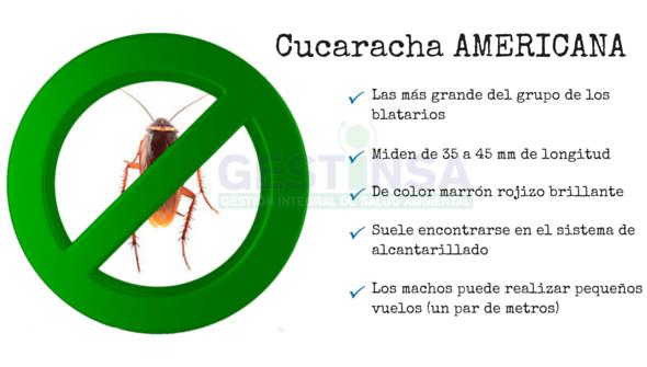 Cucaracha americana diagnostico y tratamiento