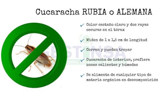 Plaga de cucaracha rubia o alemana
