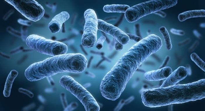 Contaminantes biológicos en la calidad del aire en interiores