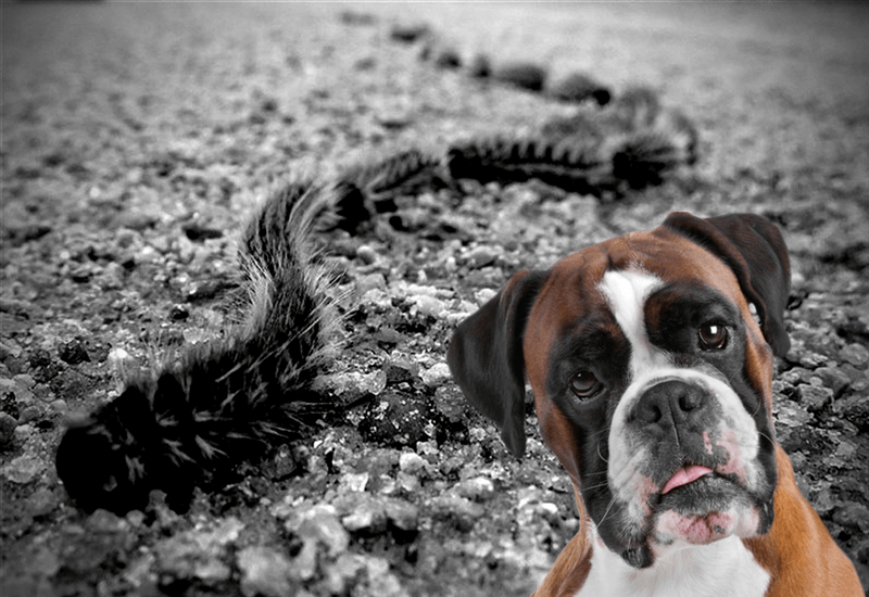 Peligros de la oruga procesionaria en nuestros perros
