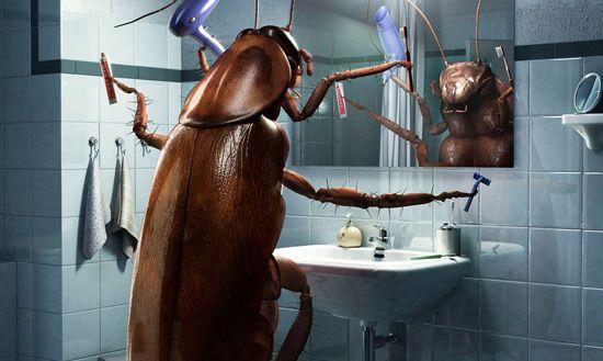 Plaga de cucarachas negras en el bañio