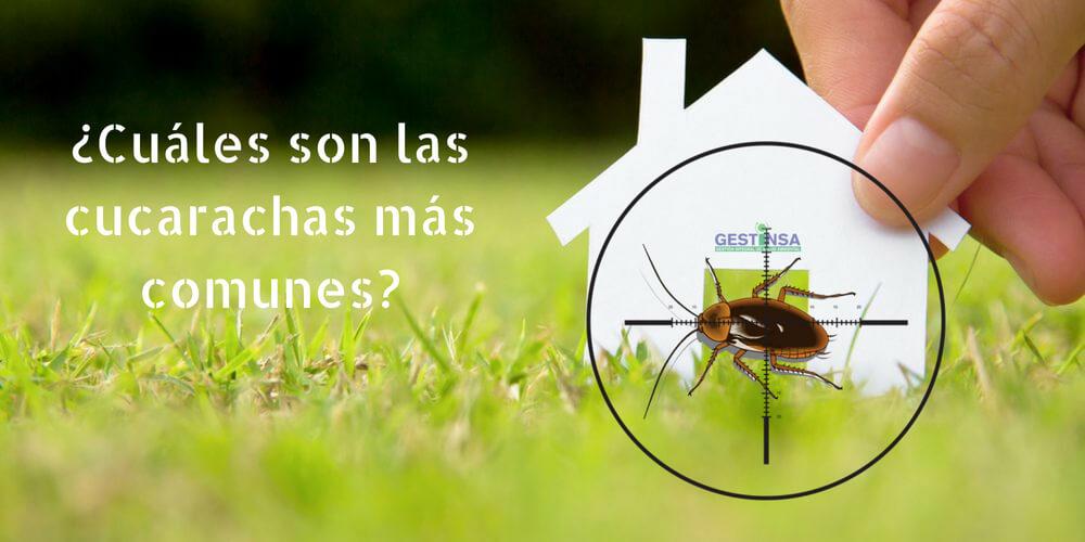 ¿Cuáles son las cucarachas más comunes en nuestros casas?