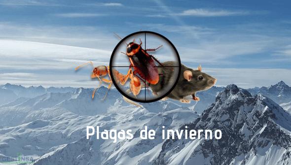 Conoce las principales plagas que puedes sufrir en invierno
