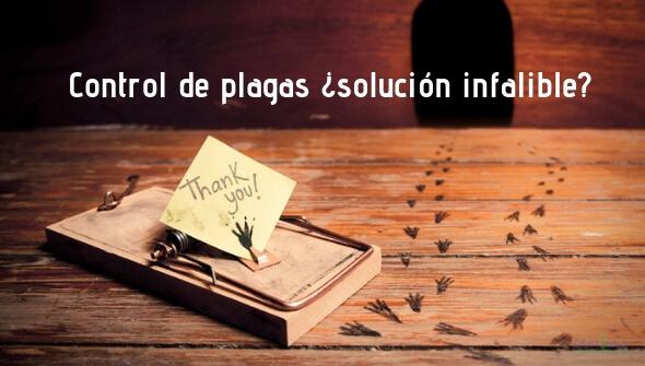 ¿son eficaces las empresas de control de plagas?