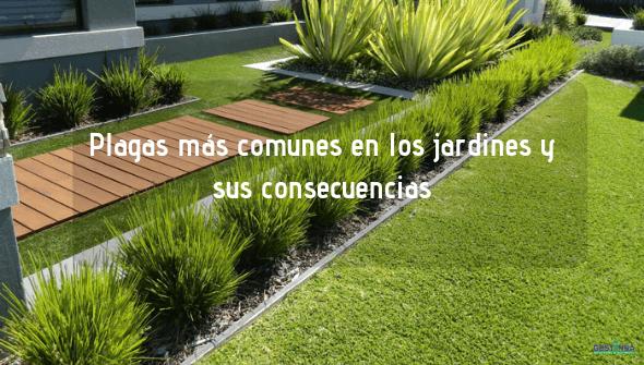 Conoce cuales son las plagas más comunes en los jardines y sus consecuencias