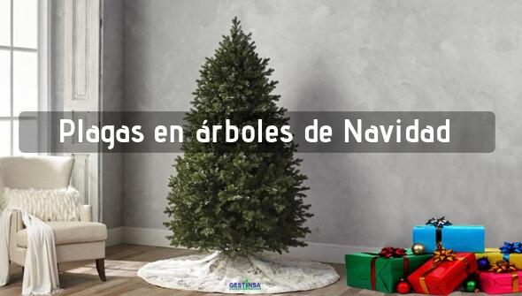 Plagas en árboles de Navidad