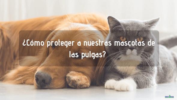 Proteger a nuestras mascotas de pulgas